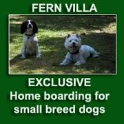 Fern Villa: EXCLUSIVE home boarding for Small dogs